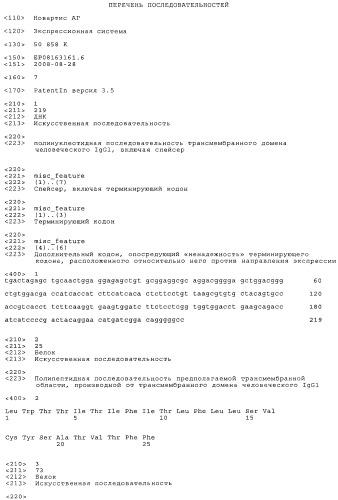 Дисплей на поверхности клеток полипептидных изоформ на основе прочитывания терминирующего кодона