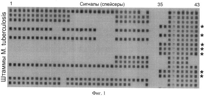 Способ выявления микобактерий туберкулеза генотипа веijing в режиме реального времени