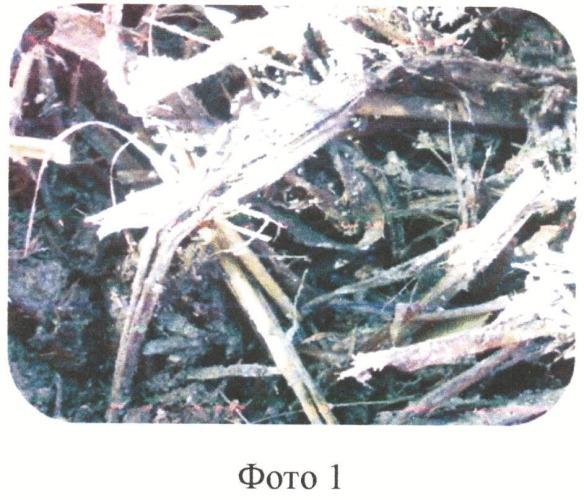 Способ компостирования послеуборочных растительных остатков сельскохозяйственных культур