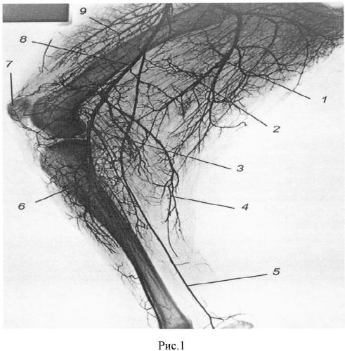 Способ изготовления рентгеноконтрастной массы для вазорентгенографии при посмертных исследованиях животных