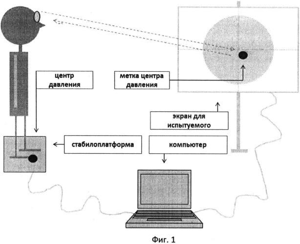 Двухфазный двигательно-когнитивный тест с биологической обратной связью по опорной реакции