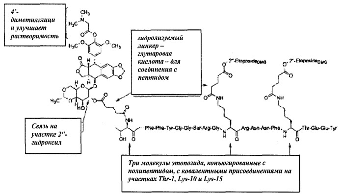 Конъюгаты этопозида и доксорубицина для доставки лекарственных средств