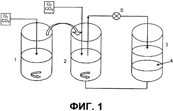 Способ селективного извлечения фосфора в форме биомассы из твердых материалов