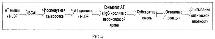 Способ количественного определения содержания фактора дифференцировки-прогностического биомаркера состояния сосудистой системы у человека в норме и патологии