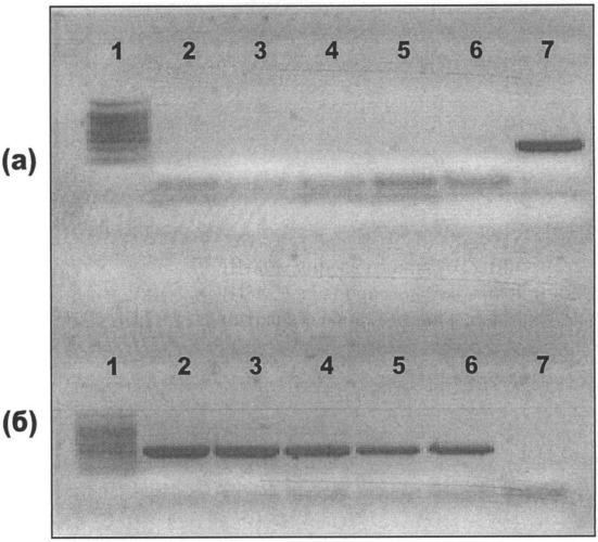 Штамм вируса гриппа а/17/виктория/2011/89 (h3n2) для производства живой гриппозной интраназальной вакцины для взрослых и для детей
