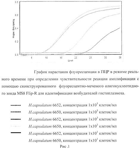 Флуоресцентно-меченый олигонуклеотидный зонд ms8 flip-r для идентификации возбудителя гистоплазмоза histoplasma capsulatum