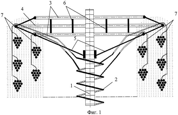 Способ декоративного оформления вертикально ориентированных опор посредством древесных растений с неустойчивым стеблем (вариант русской логики - версия 1)