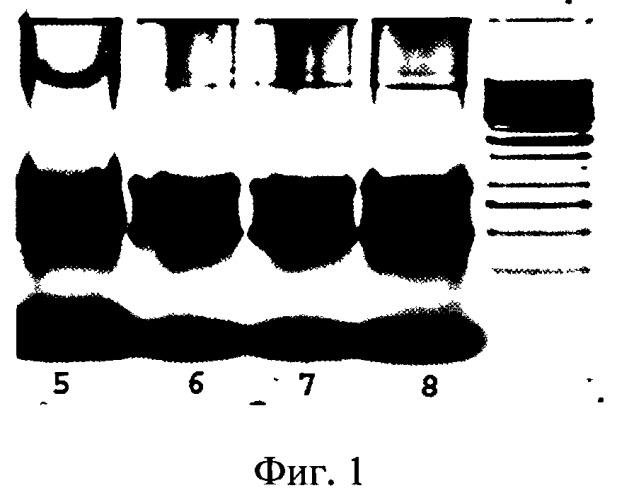 Способ диагностики окислительного стресса измерением экспрессии кислородчувствительных генов (варианты)