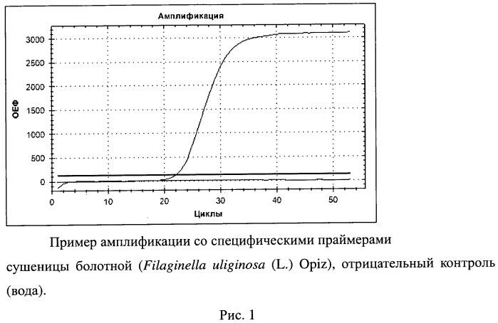 Набор синтетичеcких олигонуклеотидов для выявления видовой принадлежности сушеницы болотной (filaginella uliginosa (l.) opiz)