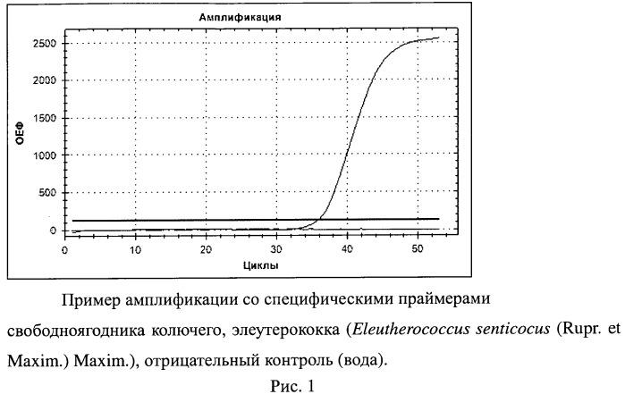 Набор синтетических олигонуклеотидов для выявления видовой принадлежности свободноягодника колючего, элеутерококка (eleutherococcus senticocus (rupr. et maxim.) maxim.)