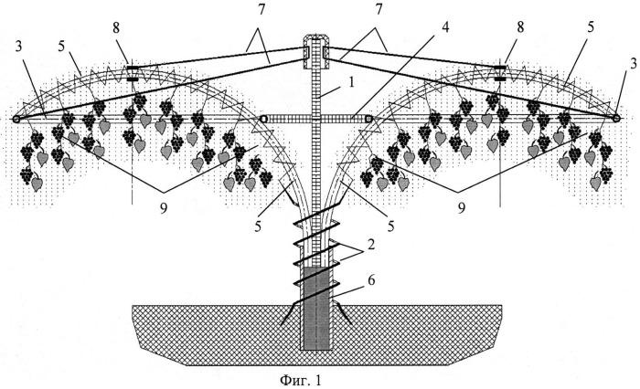 Способ формирования виноградной чаши ru из плодовых побегов (вариант русской логики - версия 6)