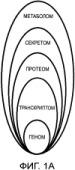 Противоопухолевый индивидуальный протеом-основанный таргетный клеточный препарат, способ его получения и применение этого препарата для терапии рака и других злокачественных новообразований