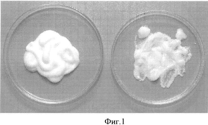 Крем медицинского назначения, изготовленный с использованием фрамицетина сульфата и хитозана, и способ его изготовления