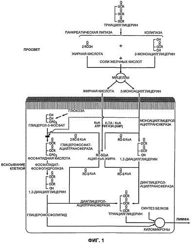 Композиция, содержащая комбинацию по меньшей мере одного протеолитического фермента и по меньшей мере одного липолитического фермента, для применения в предотвращении синтеза триглицеридов