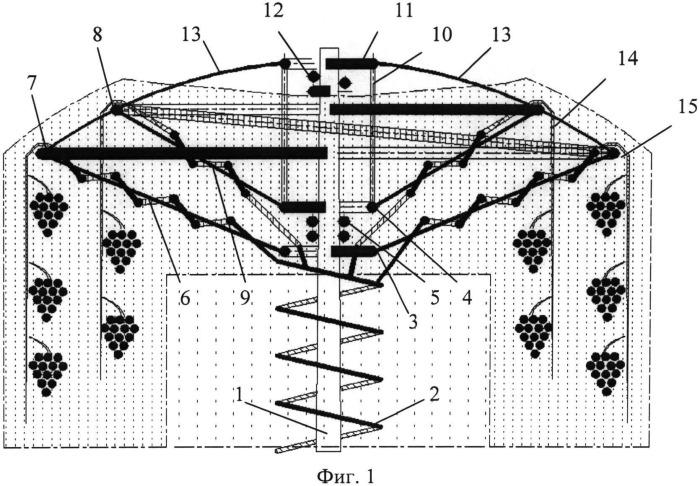 Способ формирования кроны виноградника в нижней части тополевидных древесных растений (вариант русской логики - версия 2)