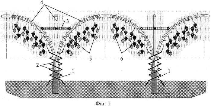 Способ формирования виноградной чаши ru из плодовых побегов на плантации винограда (вариант русской логики - версия 9)