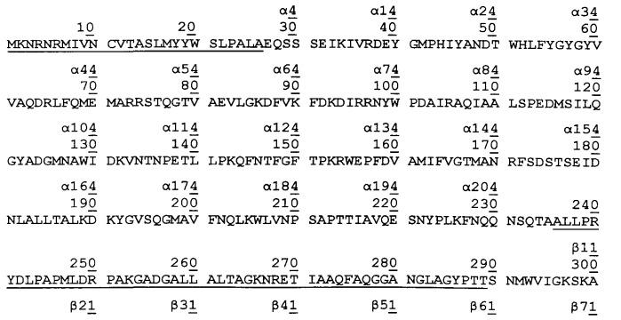 Способ синтеза пептидов, в том числе бета-лактамных антибиотиков, при использовании варианта пенициллинацилазы