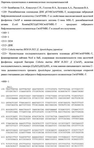 Рекомбинантная плазмидная днк pet40cmap/mbl-t, кодирующая гибридный бифункциональный полипептид cmap/mbl-t со свойствами высокоактивной щелочной фосфатазы cmap и маннан-связывающего лектина с-типа mbl-t, рекомбинантный штамм e.coli rosetta(de3)/pet40cmap/mbl-t - продуцент гибридного бифункционального полипептида cmap/mbl-t и способ его получения