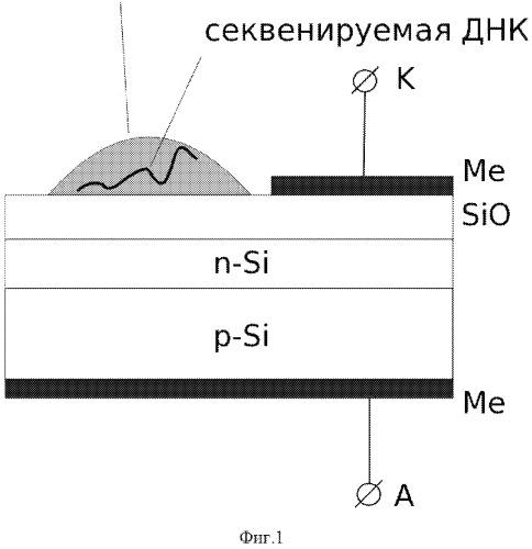 Способ секвенирования днк и устройство для его осуществления (варианты)