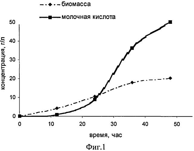 Рекомбинантный штамм дрожжей schizosaccharomyces pombe - продуцент молочной кислоты