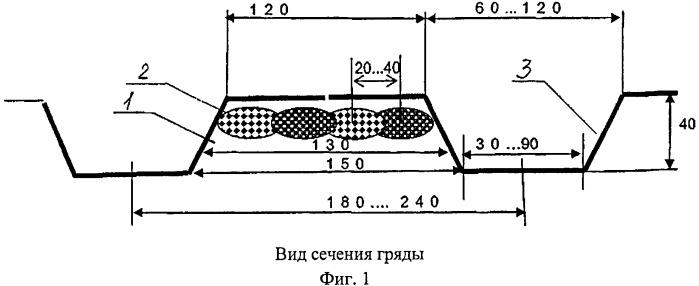 Способ возделывания топинамбура