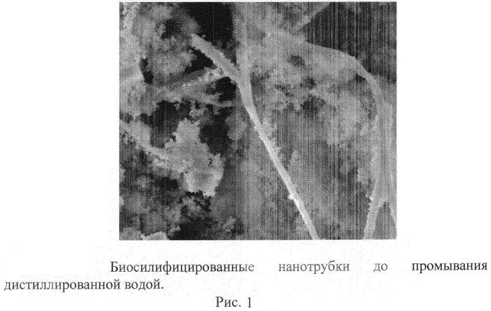 Способ получения биосилифицированных нанотрубок