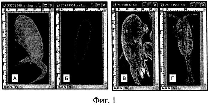 Способ идентификации живых и мертвых организмов мезозоопланктона в морских пробах