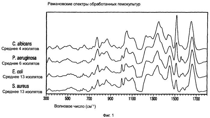 Способ идентификации микроорганизмов из тестируемого образца гемокультуры