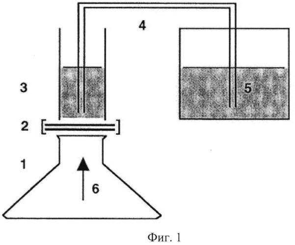 Способ оценки степени повреждения твердой мозговой оболочки различными видами спинномозговых игл
