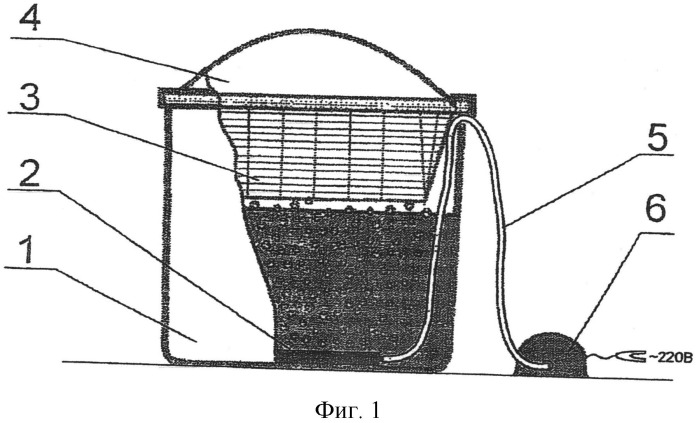Способ выращивания зеленых гидропонных кормов
