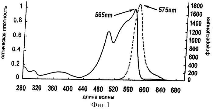 Способ и устройство для получения фикоэритрина с высокой оптической плотностью
