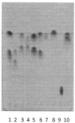 Способ получения хиральной планарной пластины для тонкослойной хроматографии оптических изомеров