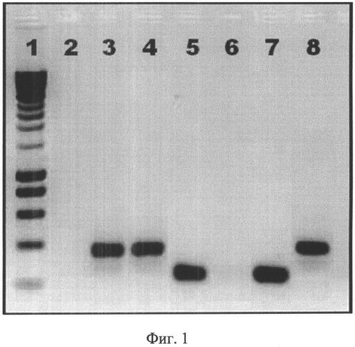 Вакцинный штамм вируса гриппа в/60/висконсин/2010/125