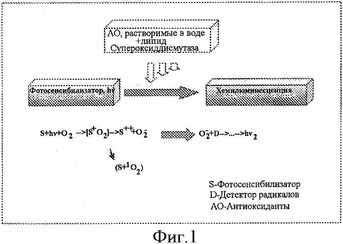 Экстракт цельных семян moringa sp. и его применение в косметических и/или дерматологических композициях
