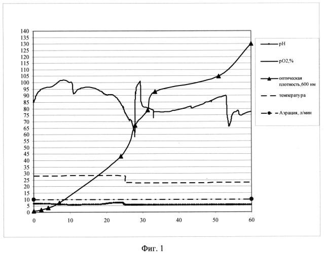 Способ микробиологического синтеза гибридного белка е7-hsp70 (варианты)