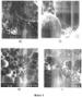 Сухая смесь для приготовления неавтоклавного газобетона (варианты)