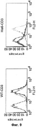 Pscaxcd3, cd19xcd3, c-metxcd3, эндосиалинxcd3, epcamxcd3, igf-1rxcd3 или fap-альфаxcd3 биспецифическое одноцепочечное антитело с межвидовой специфичностью