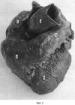 Способ изготовления сухого анатомического препарата сердца
