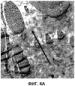 Формованное полимерное изделие, характеризующееся низкой мутностью и высокой прозрачностью