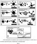Способ определения ботулинического нейротоксина типа а на основе иммунодетекции, сопряженной с полимеразной цепной реакцией