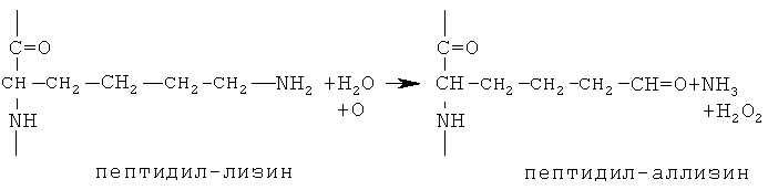 Антитела, связывающиеся с лизилоксидазоподобным ферментом-2 (loxl2), и способы их применения