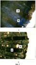 Способ гистохимического определения степени повреждения виноградных побегов морозами