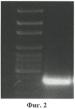 Рекомбинантная днк pa3, рекомбинантная днк pqe 30-pa3, обеспечивающие получение полипептида a3, штамм e. coli м 15-a3, трансформированный рекомбинантной плазмидной днк pqe 30-pa3 и экспрессирующий рекомбинантный полипептид a3, рекомбинантный полипептид a3, обладающий способностью селективно связывать чса, и тест-система рфа для качественного выявления микроальбуминурии, тест-система для количественного определения микроальбуминурии