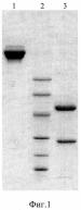 Моноклональное антитело против интерлейкина-6 человека и гибридома, продуцирующая данное моноклональное антитело