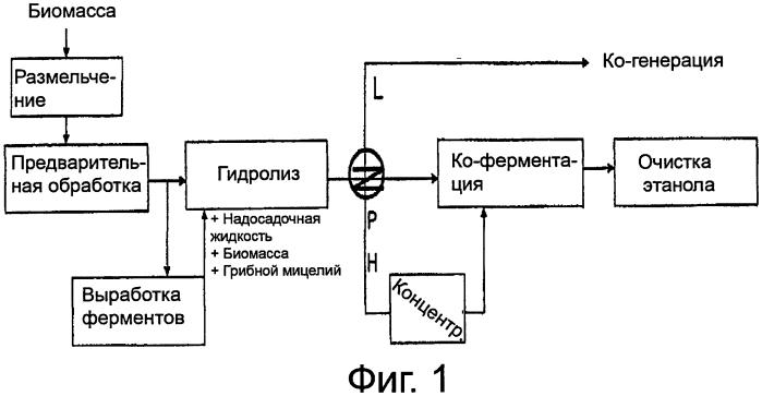 Эффективный гидролиз лигноцеллюлозы, совмещенный с выработкой ферментов
