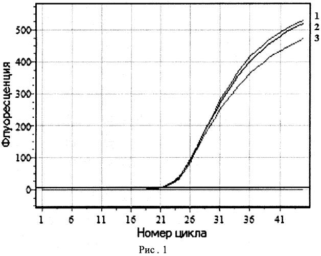 Набор флуоресцентно-меченых олигонуклеотидных зондов для типирования штаммов burkholderia mallei методом амплификации дифференцирующих фрагментов днк