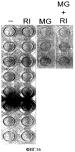 Способы, поверхностно-модифицированные носители и композиции для иммобилизации, культивирования и открепления клеток