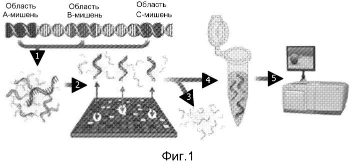 Устройство и способ отбора нуклеиновых кислот с помощью микроматриц
