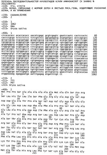 Белки, связанные с формой зерен и листьев риса, гены, кодирующие указанные белки, и их применения