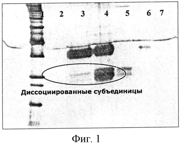 Жидкий состав фолликулостимулирующего гормона